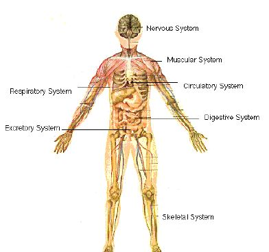 Information on Various Body Organ Functions and Systems - Andreas Moritz