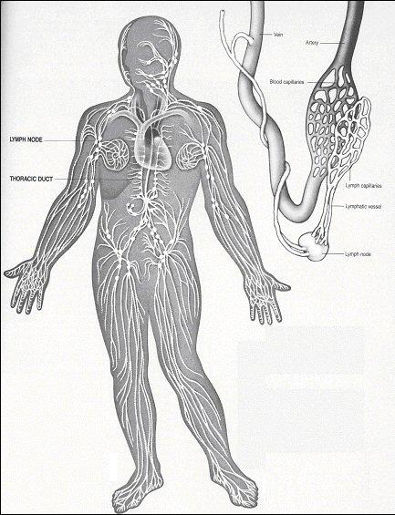 Poor Circulation Enlargement Of The Heart Spleen Varicose Veins